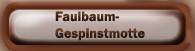 Faulbaum-Gespinstmotte